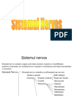Sistemul Nervos Central Complet