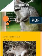 137133985 Kawalan Tikus Di Ladang Sawit