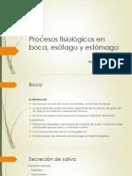 Fisio Boca Esófago y Estómago USB
