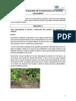 Caso Deforestacioìn de La Amazonia