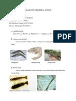 Filamentous Bacterial Disease