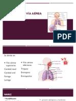Anatomía de Vía Aérea