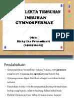13 Gymnospermae