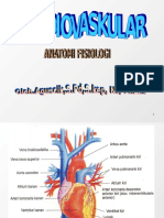 Anatomi cardiovaskular