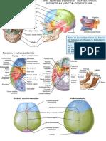 Roteiro de figuras do esqueleto axial II.pptx