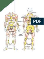 Human Body.pdf