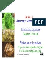 Asparagus Racemosa