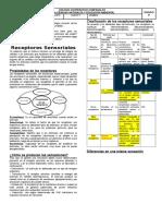 89052772-Guia-de-Receptores-Sensoriales-1.doc
