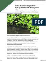 EDIA Confirma Mancha de Jacinto-De-água a Três Quilómetros Do Alqueva - PÚBLICO