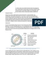 Patofisiologi HIV pada anak