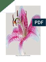 Bunga Lily Berasal Dari Negara Finlandia
