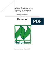 banano.pdf