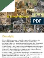Lince-Ibérico.pptx