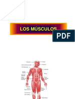 Musculos i