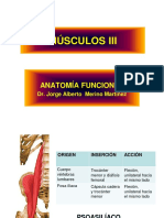 Musculos III