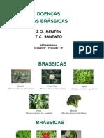 Brassicas Alface Cebola Alho