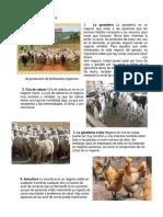 Animales de Cría en Agricultura