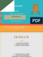 Hongos Exposicion ACTUAL