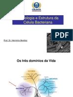Aula 1_ Morfologia Bacteriana