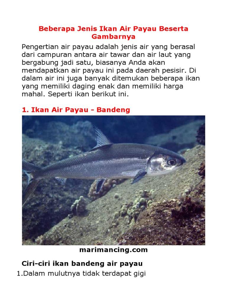 Ikan Air Laut Tawar Dan Payau
