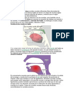 Introduction of Fonetica Inglesa 1