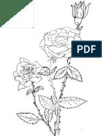 Flori Trandafiri