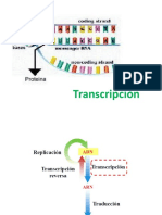 transcripcion