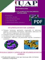 Staphylococcus Aureus Capsular Polysaccharides