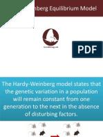 hardy weinberg equilibrium model