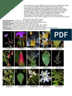 Flora Album