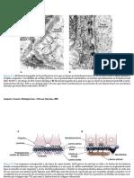 tejido epitelial