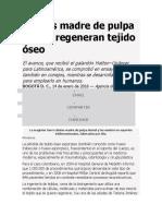 Células Madre de Pulpa Dental Regeneran Tejido Óseo