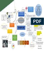 Mapa Mental Fundamentos