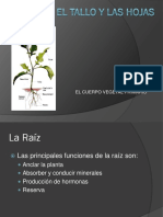 mafiadoc.com_la-raiz-el-tallo-y-las-hojaspdf-botanicaense_59d05ece1723ddd7865bef1b.pdf