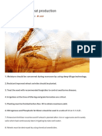 Useful Tips for Wheat Production - Pakissan.com