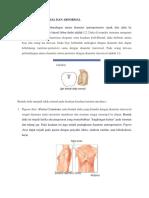 bentuk dada normal dan abnormal
