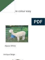 Pre Colours
