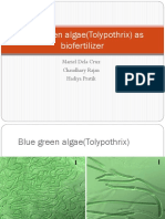 Blue green algae(Tolypothrix) as biofertilizer.pptx
