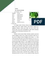 Fitokimia uraian tanaman dan bahan