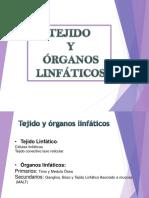 7. Tejido Linfatico V