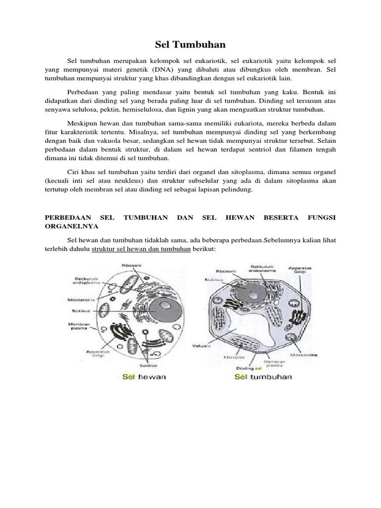 45+ Gambar Struktur Sel Hewan Dan Tumbuhan Beserta Organel Organelnya HD Terbaik