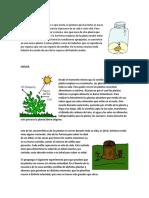 Ciclo de Vida de Las Plantas