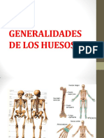 Generalidades de Los Huesos (1)