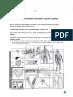 Ciencias 5° básico célula, tejidos, organos y sistemas.