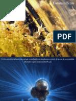 06 - Foraminíferos.pdf