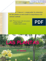 Ppt Planta