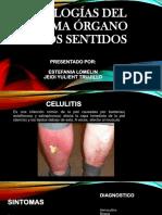 Pato-órgano de Los Sentidos Celulitis y Piodermitis