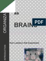 Org as Brains2