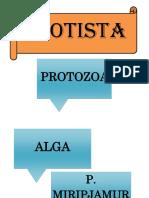 PROTISTA.docx