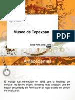 Hombre de Tepexpan Museo